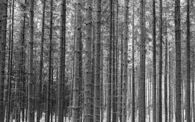 Mord-im-Heiligenwald---Promobild11
